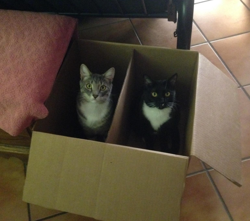 Apollo & Sheba in a box